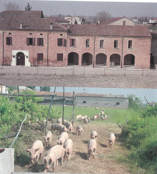 Immagini dei primi maiali allevati a biologico di PrimaVera Bio