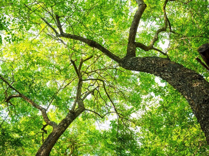 Tree in forest with green leaf